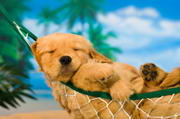 Pets Relax and Restore Psychological Health